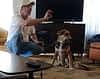 Dog Training Classes   Fresno, Clovis, Chowchilla, Madera, Visalia, Tulare, Hanford