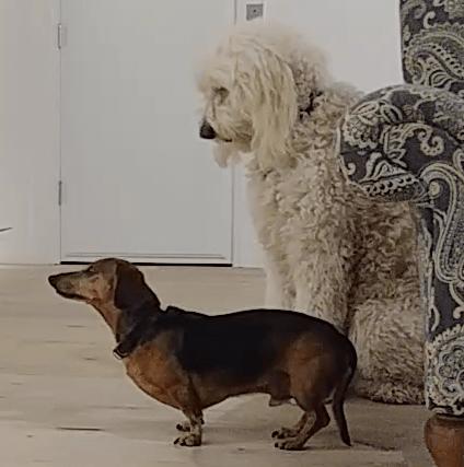 Dog Obedience Training | Fresno, Clovis, Chowchilla, Madera, Visalia, Tulare, Hanford
